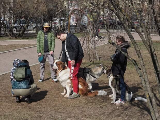 Петрогадская сторона. Как собачница из Петербурга съездила в Нью-Йорк и разочаровалась в соотечественниках