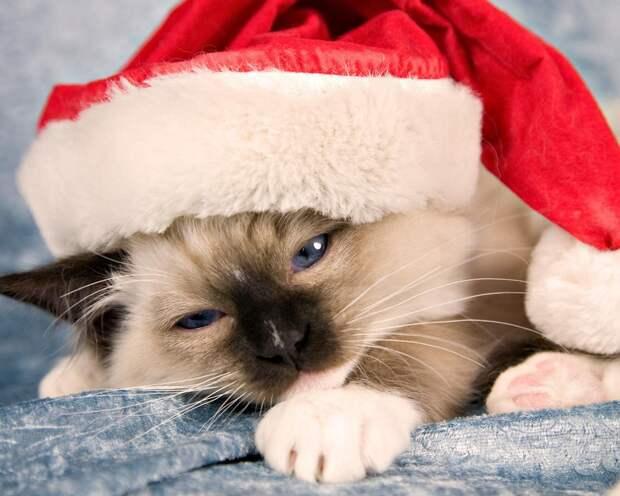Пост доброты и праздника. Новогодние домашние животные