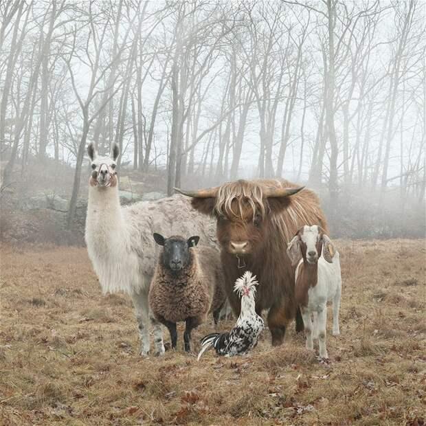 Деревенские животные