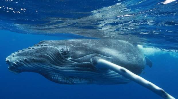 Ученые в тупике — найден мертвый кит посреди бразильского леса, видео