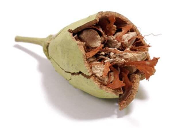 5)Поджаренные семена баобаба еда, здоровье, напитки, сделай сам