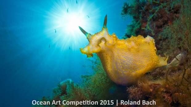 Лучшие подводные фотографии 2015 года показывают тайны морской жизни