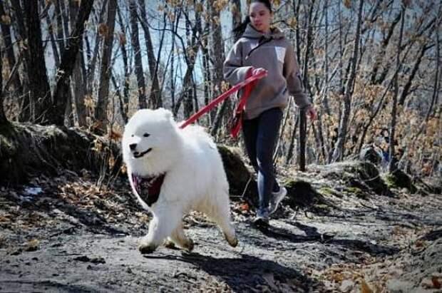 По уши в грязи: в Благовещенске прошел кросс-квест с собаками
