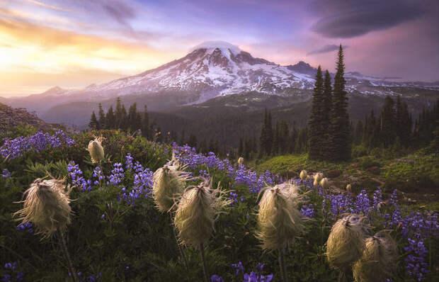 Завораживающие фото природы названные лучшими жюри Международного конкурса пейзажной фотографии 2020 года