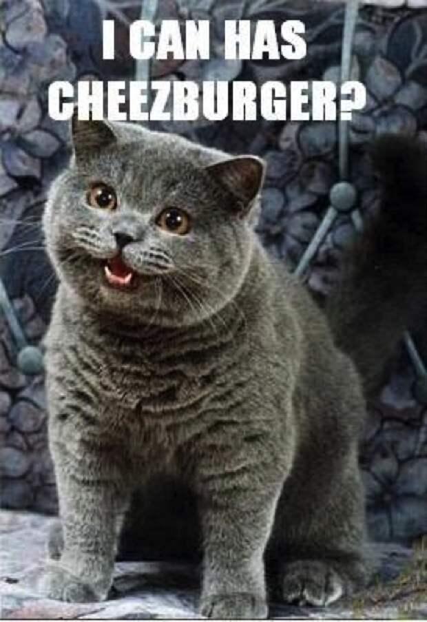 Кошачий бум: Почему коты популярнее других животных