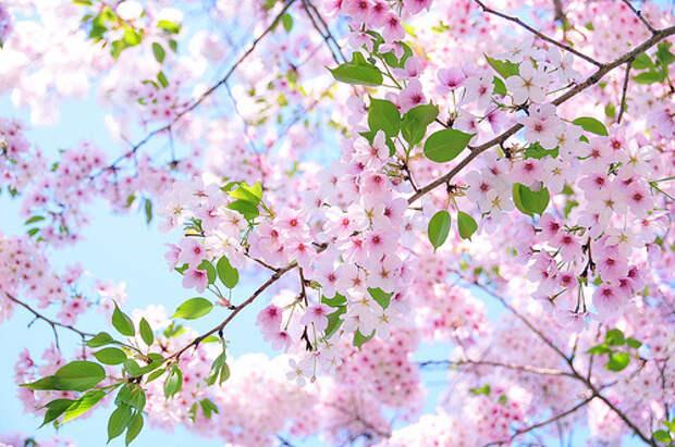 Какие деревья сажают весной