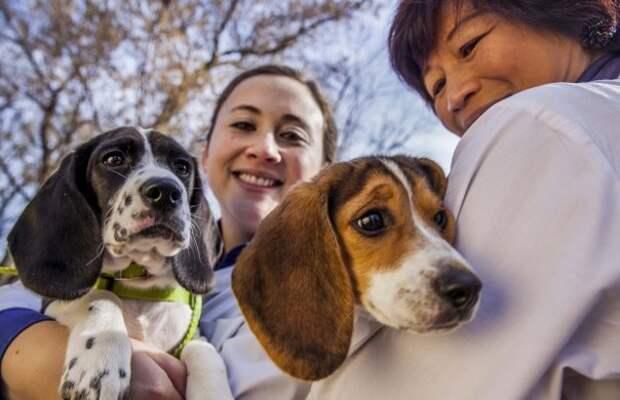 """В США родились первые в мире щенки """"из пробирки"""""""