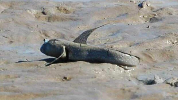 Рыба Ланг. выживание, животные, наука