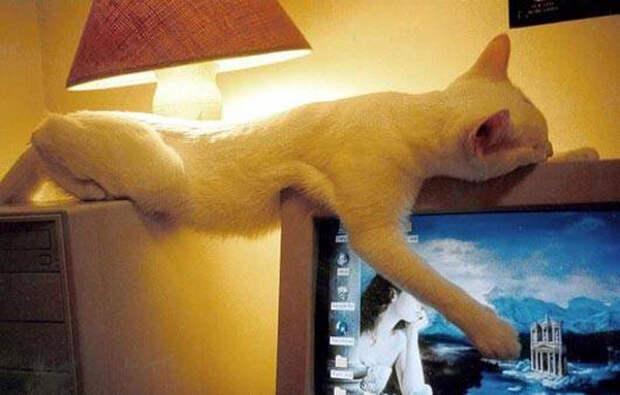 Важно уметь держать равновесие. животные, кот, прикол, сон