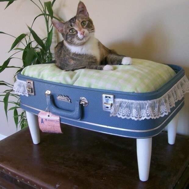 Место для кошки из чемодана