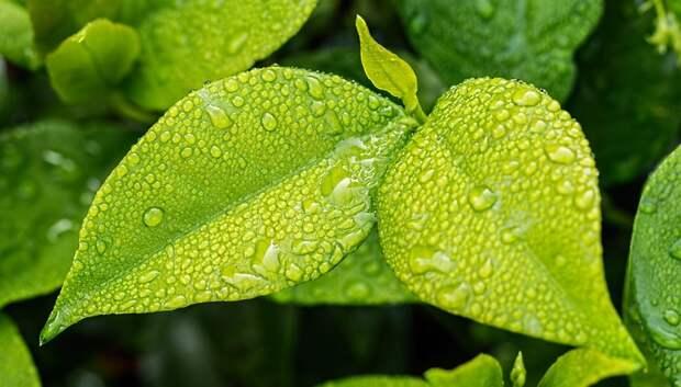 Дождь и до плюс 26 градусов ожидается в пятницу в Подольске