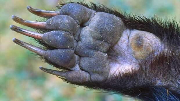 Барсук: Дед в шкуре животного. Отстраивает городища возрастом в сотни лет, лишь бы не встречаться с обитателями поверхности