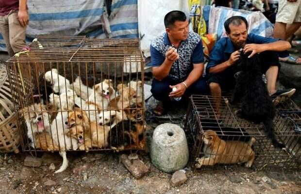 В Китае запрещают есть собак и кошек. Казалось бы, причем здесь коронавирус?