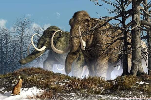 Учёные хотят «воскресить» вымерших мамонтов
