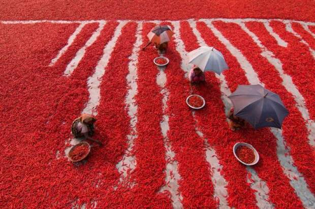 Богра, Бангладеш. Автор фотографии: Азим Хан Ронни (Azim Khan Ronnie).