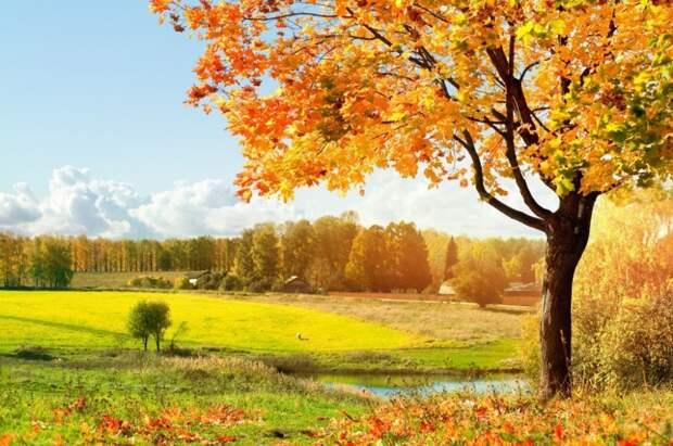 Для души: поэзия октября