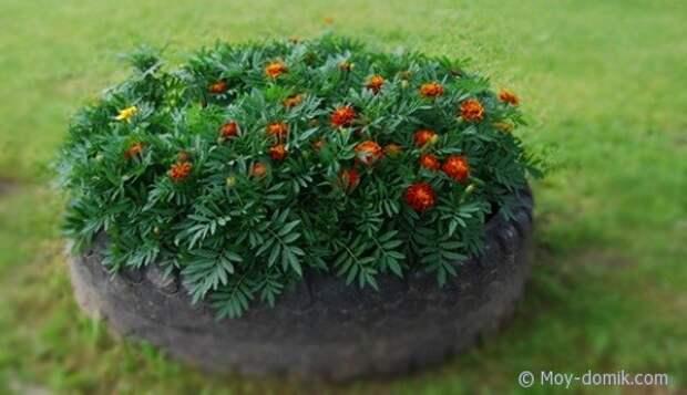 Садовая клумба в шине