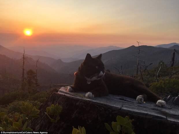 Кот-путешественник, посетивший самые красивые места Америки