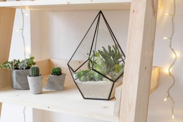 Декор комнатных растений