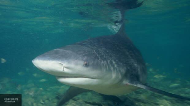 Акула напала на 13-летнего ребенка в США