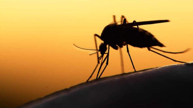 Историческое событие: ВОЗ рекомендует уникальную новую вакцину против малярии для детей в Африке