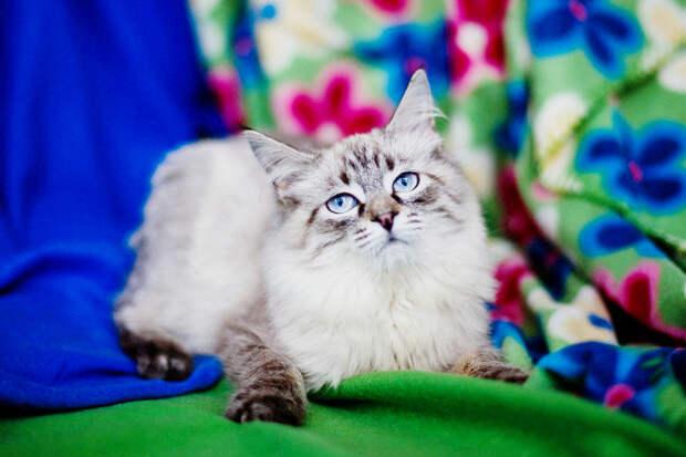Пятничный котик Льюис. Его выгнали, давай его приютим!