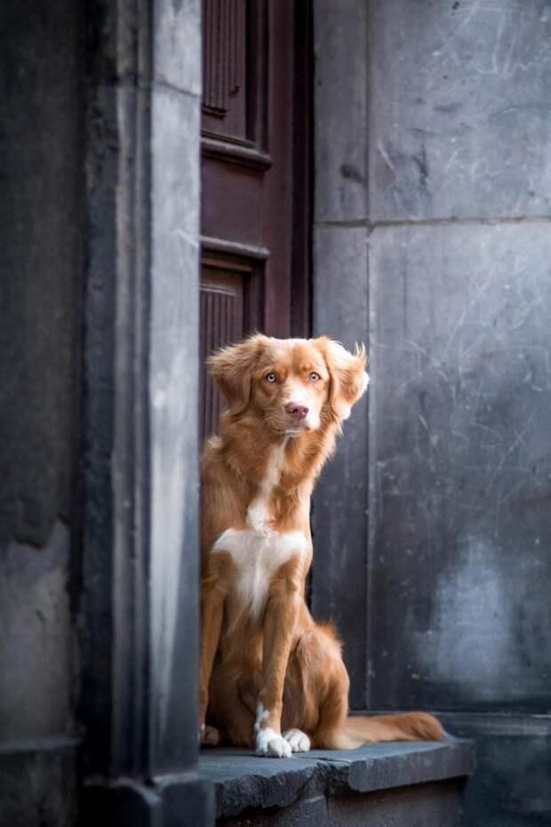 Второе место в категории «Портрет» великобритания, животные, интересное, конкурс, собака, собаки