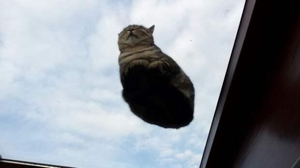 вид снизу коты на стеклянных столах (13)