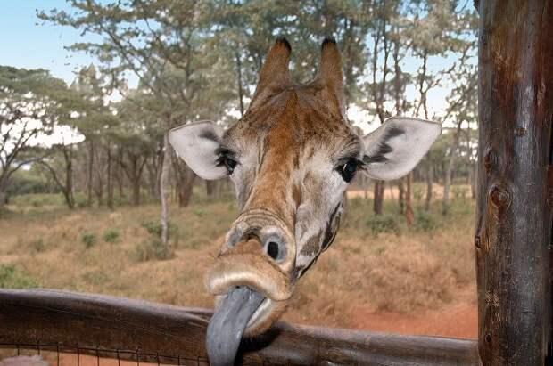 Необычный конкурс Comedy Wildlife Photography Awards 2015