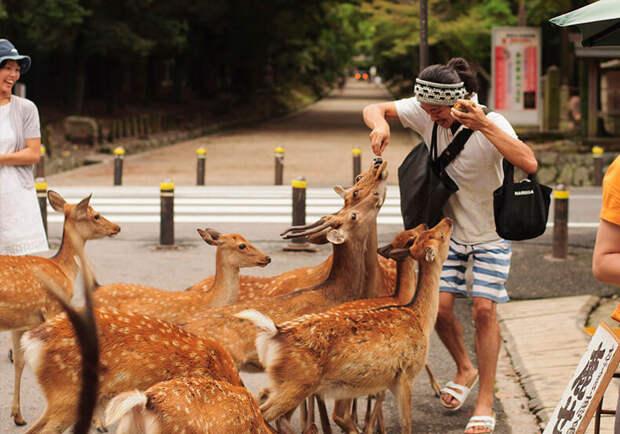 Самые надоедливые животные мира