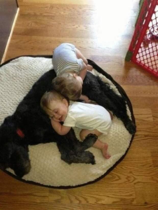 30 волнующих снимков собак и их любимых людей