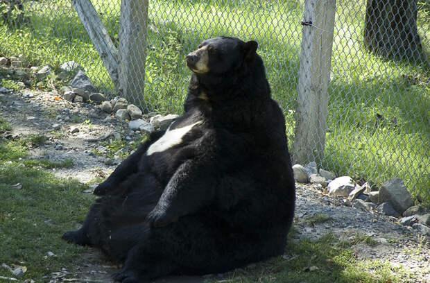 20 животных, которые остаются милыми даже не смотря на свой лишний вес