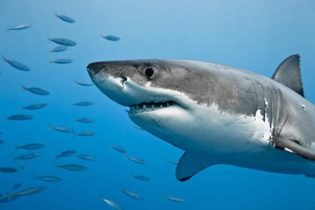 8. Я гримасничаю на фотографиях, потому что это лучше неудавшейся улыбки Белая акула, фото