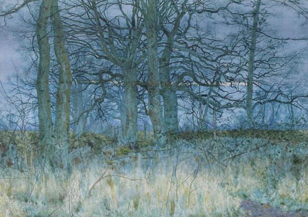 Деревья зимой (Trees in winter) (656x464, 441Kb)