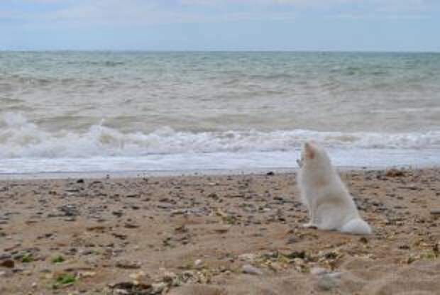 Домик у моря. Как бесплатно получить землю в Крыму