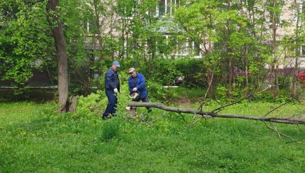 Подрядчик спилил 4 сухих дерева на улице Ленина в Подольске