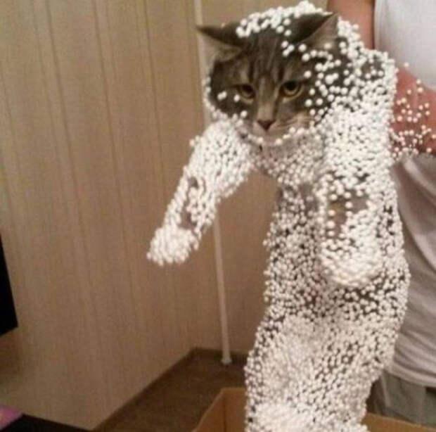 13. Вот теперь хотя бы понятно, почем меня назвали Снежком животные, кот, юмор