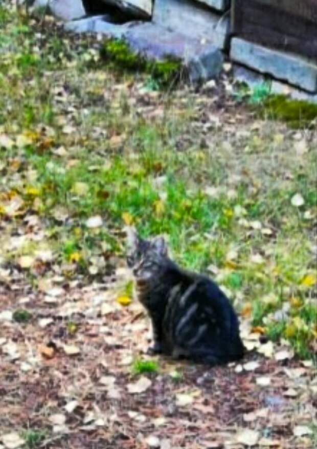 Умоляем, помогите!!! В садоводстве остаётся на голодную смерть кошачья семья...