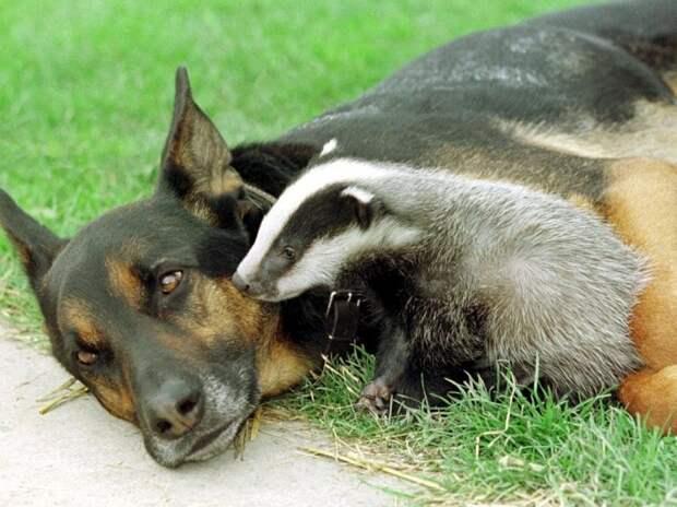 Усыновление у животных