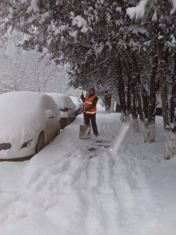 Возможно, это изображение (снег и дерево)