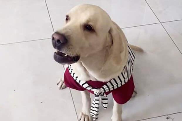 Собака из Китая решила принимать пищу как человек
