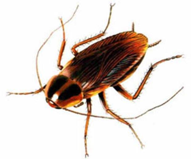 Микроохота: человек против таракана
