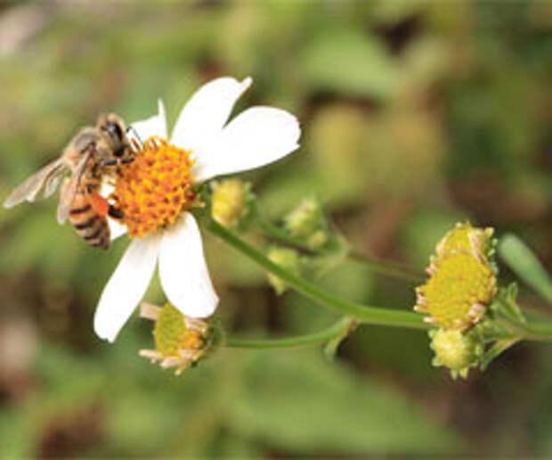 Наши пчёлки: идея продвижения