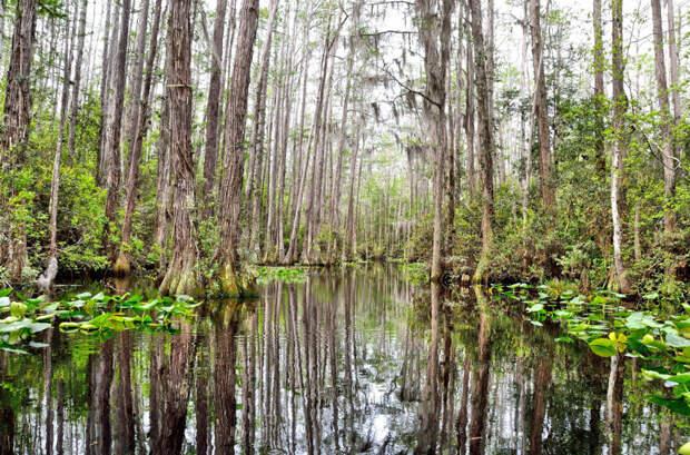 Колдовская красота болот