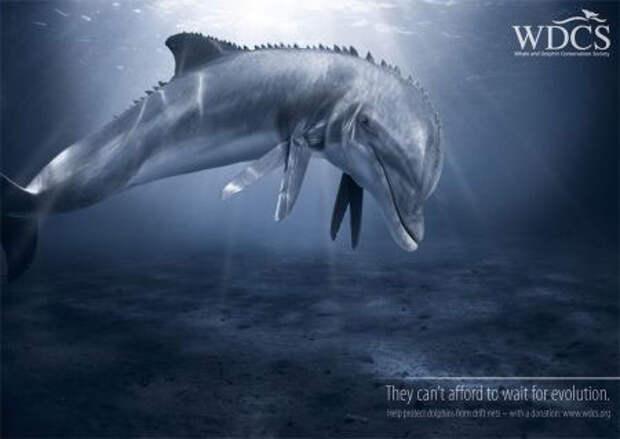 Greenpeace и WDCS: двухголосье в защиту моря