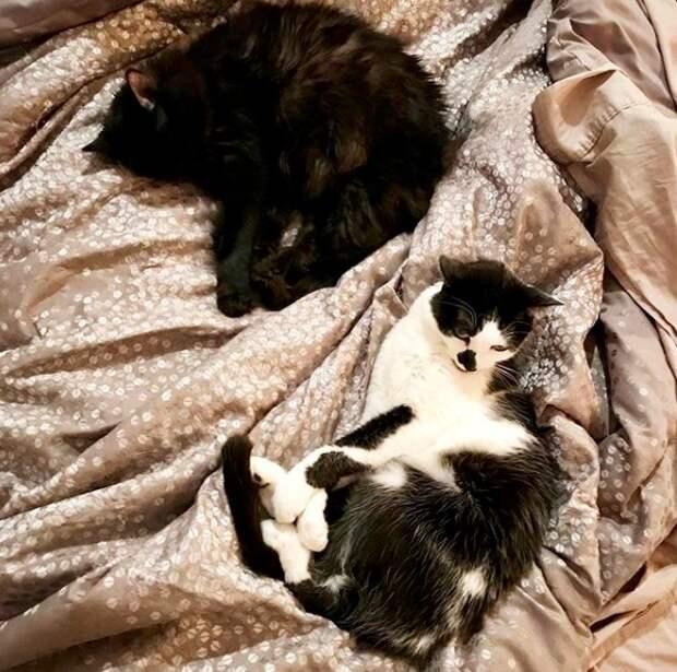 Видео с котиками растрогало пользователей: как коты скучают по своему хозяину