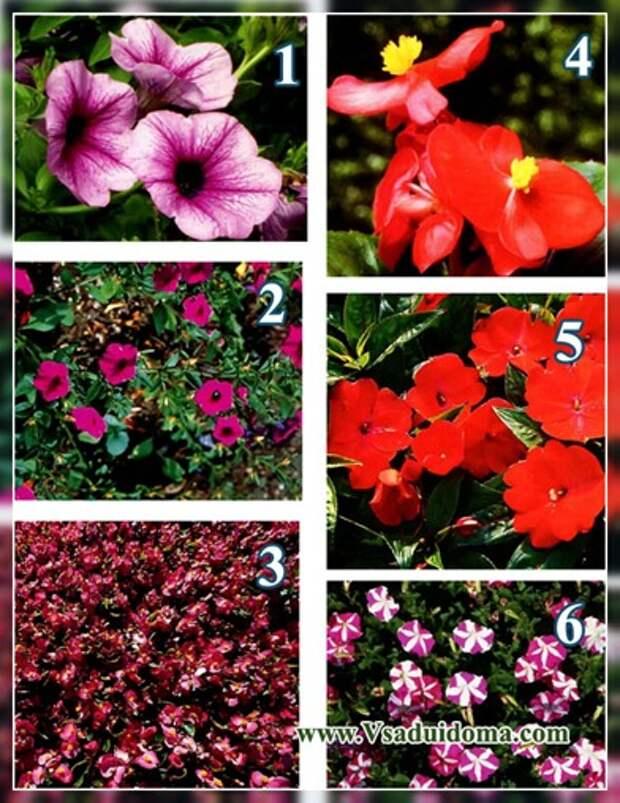 Однолетние и двухлетние садовые растения — выращивание и уход