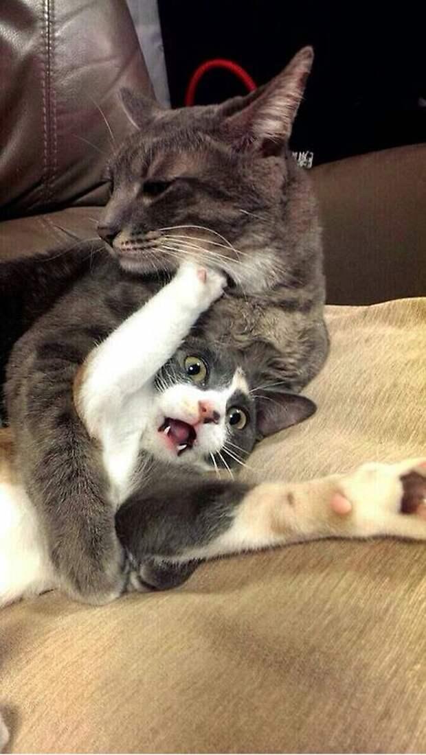 Коты, они же как люди...