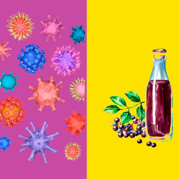 Мощные противовирусные свойства бузины