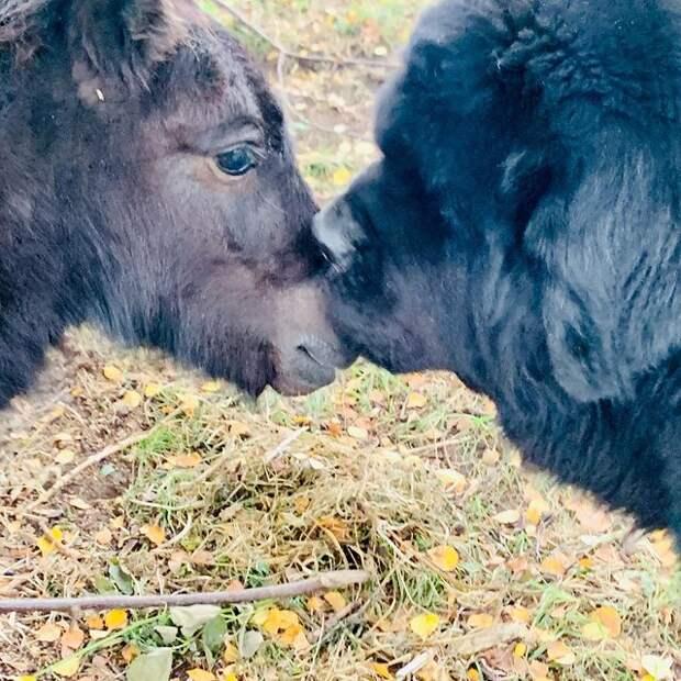 """""""Пример чистой любви"""": дружба большого пса и пони умилила Сеть"""